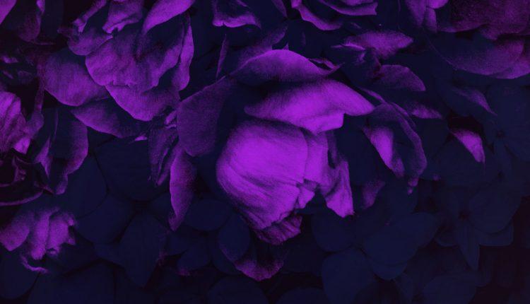 براش گل