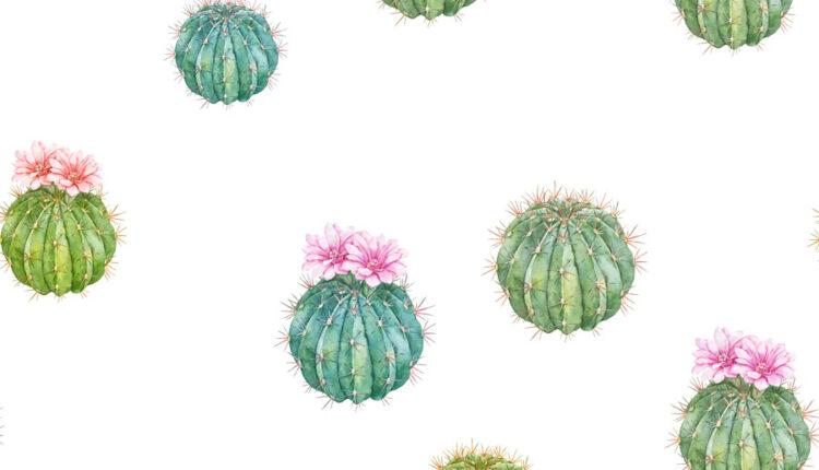 تصاویر PNG گل های کاکتوس